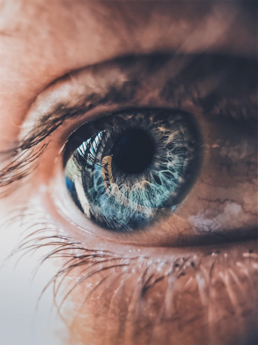 A macro photography shot of a human eye - best camera for macro photography