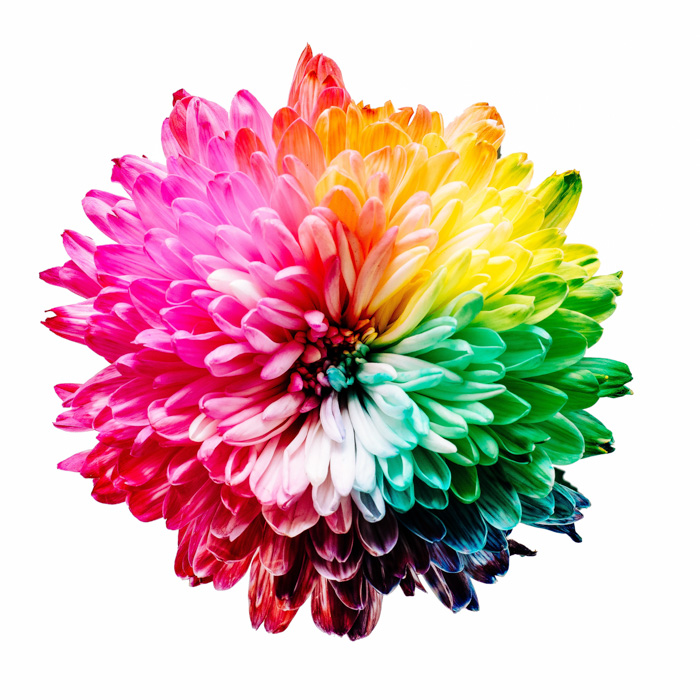 A stunning multicolored flower - Complementary Colors Examples