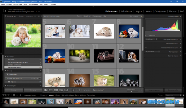 Adobe Photoshop Lightroom русская версия