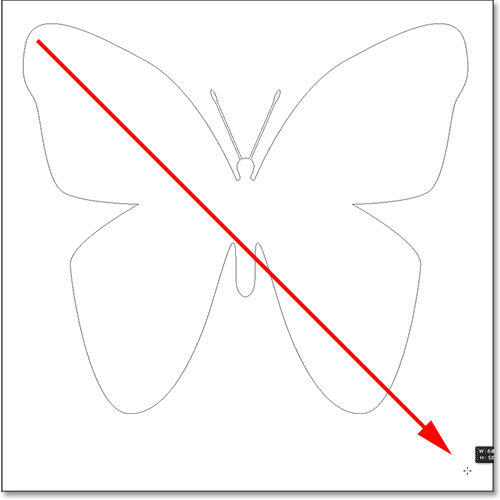 Drawing a butterfly custom shape in Photoshop