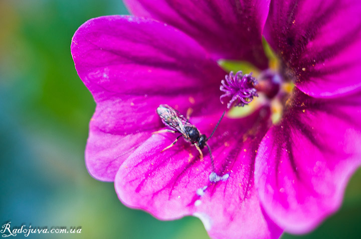 Photo using macro rings. Flower and insect